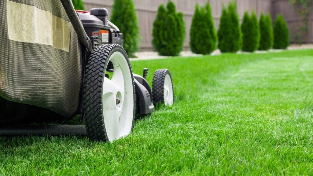 izmir hazır rulo çim